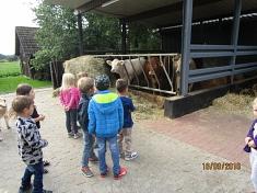 ...und Kühe©Kindergarten Tausendfüßler