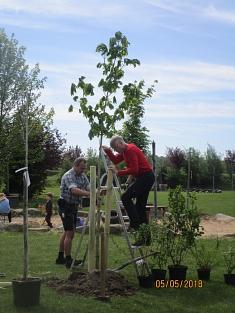 Baum pflanzen©Kindergarten Tausendfüßler