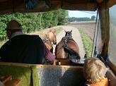 Die Pferde©Kindergarten Tausendfüßler