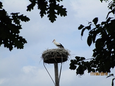 Ein Storch in der Storchenstation © Kindergarten Tausendfüßler