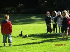 Enten im Park©Kindergarten Tausendfüßler
