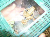 Frosch©Kindergarten Tausendfüßler