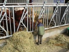 Hallo, Kühe©Kindergarten Tausendfüßler