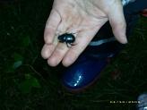 Käfer©Kindergarten Tausendfüßler