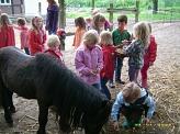 Pony streicheln©Kindergarten Tausendfüßler