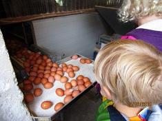 Viele Eier©Kindergarten Tausendfüßler