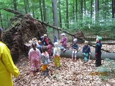 Wer hat den Baum umgeschubst?©Kindergarten Tausendfüßler