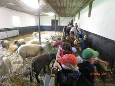 Wir füttern die Schafe©Kindergarten Tausendfüßler